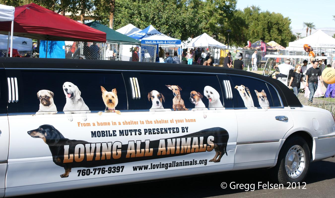 Loving All Animals